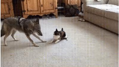 А ну иди сюда, волчара шерстяной.