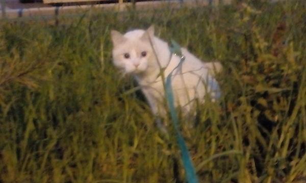 Кот в добрые руки Москва, Кот, Помощь, В добрые руки, Кот в добрые руки