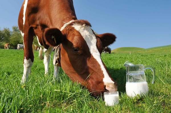 Замена грудному молоку дети, молоко, груднички, замена молока, не мое, не реклама, длиннопост