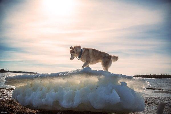 Прогулка по побережью фотография, мурманская область, море, Север, хаски, морской котик, длиннопост