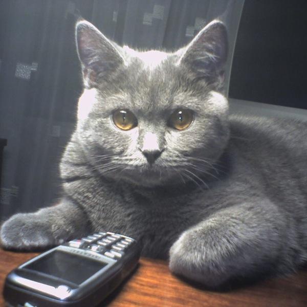 Внимательно слушаю... Кот, Фотография, Кот с лампой