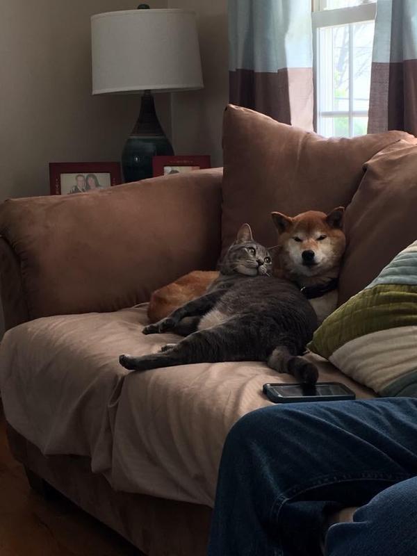 Мне всего-то нужно, что бы кто-то смотрел на меня так же как этот кот на собаку