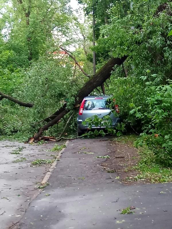 Последствия непогоды в Москве Ураган, Природа, Длиннопост