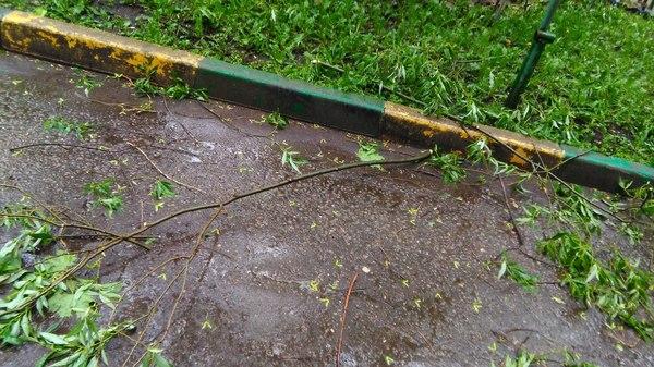 Дождик Фотография, Дерево, Дождь, Длиннопост