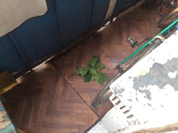 Вышел на балкон после урагана Москва, Ураган, Хайп