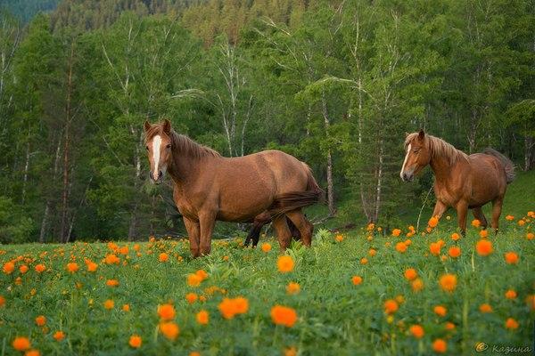 Май на Алтае Россия, фотография, Природа, май, пейзаж, надо съездить, Светлана Казина, длиннопост