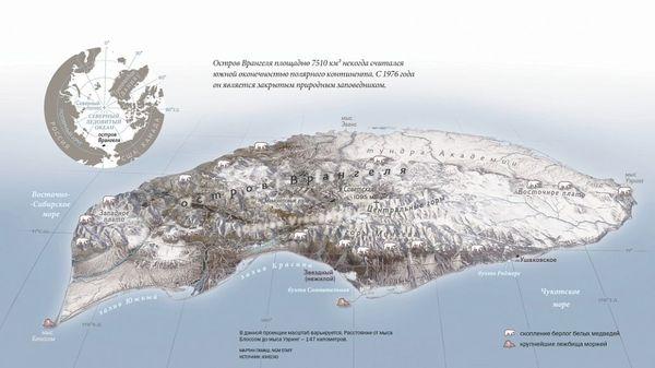 Скопления берлог белых медведей и крупнейшие лежбища моржей на острове Врангеля. Остров Врангеля, Белый медведь, Моржи