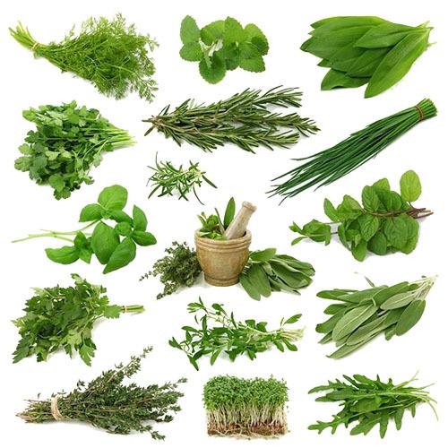 Как вырастить дома траву на подоконнике Пряные травы, Специи, Рассада, На подоконнике, Зелень, Витамины, Длиннопост
