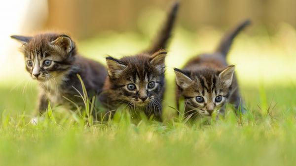 Cats first litter of kittens