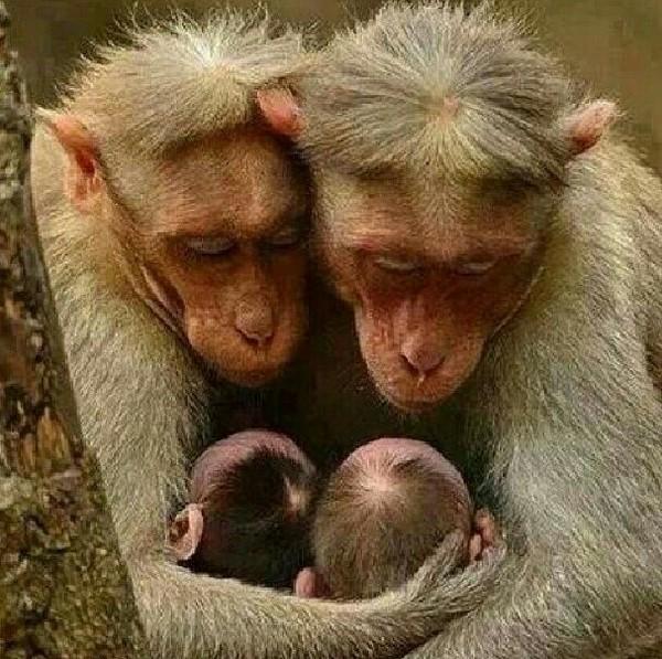 Родители Животные, отцы и дети, фотография, длиннопост