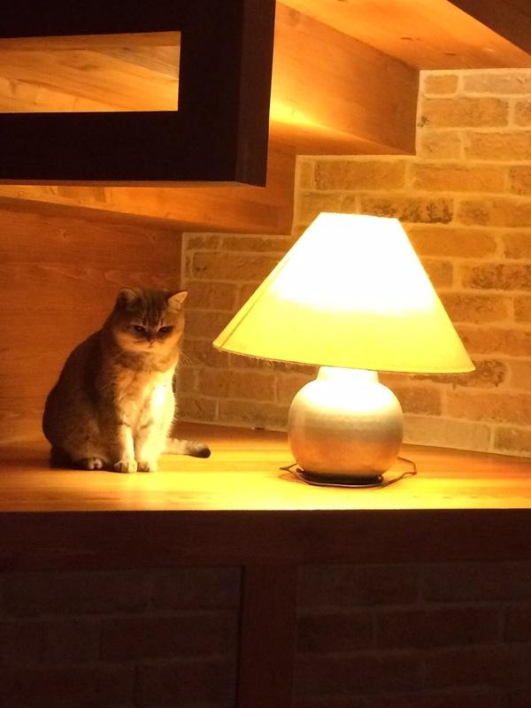 Бренность бытия. Задумалась о жизни :) Кот, Дача, Бренность, Задумался, Длиннопост