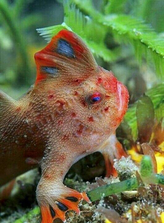 Морской мир 2 подводный мир, фотография, Рыба, морские обитатели, видео, длиннопост