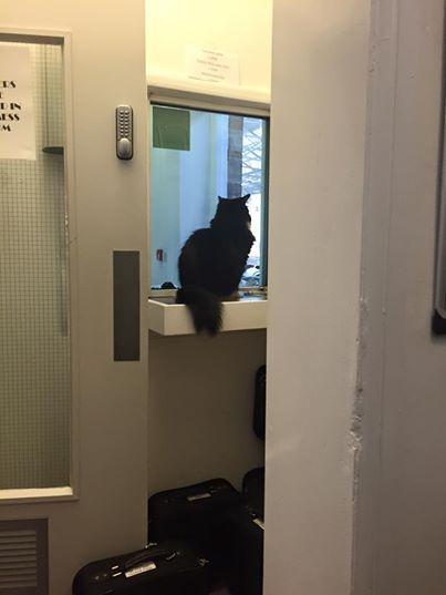 После пяти лет службы кот получил повышение!) Кот, Повышение, Вокзал, Великобритания, Длиннопост