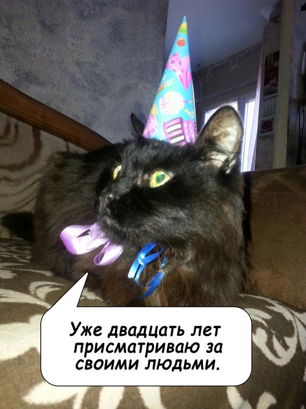 Двадцатилетие кот, юбилей, возраст, день рождения, колбаса