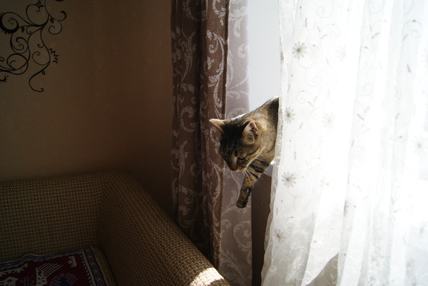 И снова про котов Кот, Малыши, Потеряшка, Ищу хозяина, Длиннопост