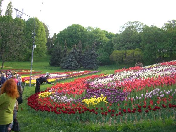 Ничего необычного... Фотография, Удачный ракурс, Киев, Тюльпаны