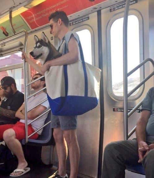 В метро Нью-Йорка можно возить собак только в сумках Нью-Йорк, собака, метро, длиннопост