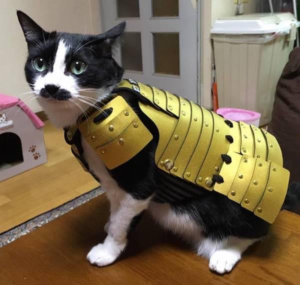 Самурайская броня для кошек и собак кот, Собака, броня, доспехи, Самурай, длиннопост