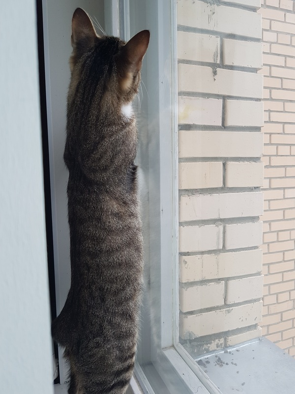 Что с этим делать? Кот, Хочет, Птицы, Ласточки или стрижи, Хрен его знает, Длиннопост