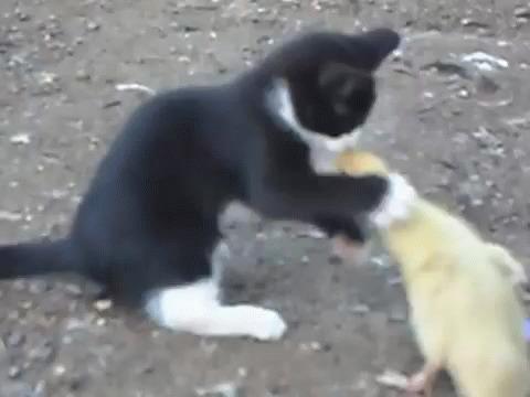 Котёнок и утёнок