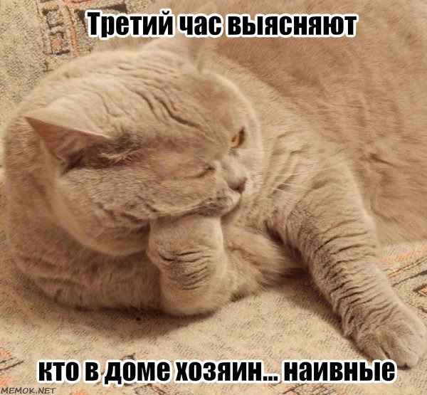Кот хозяин картинки