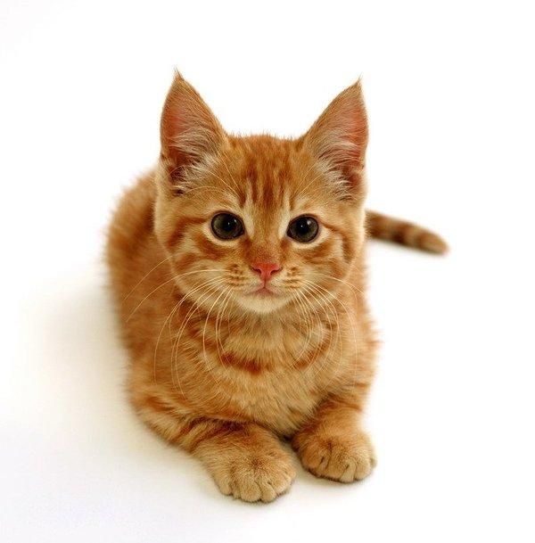 Вы слишком заботливый хозяин, нашему котику такой не нужен Текст, Кот, Приют для животных, Санкт-Петербург, Длиннопост, Моё, Маразм, Бомбит
