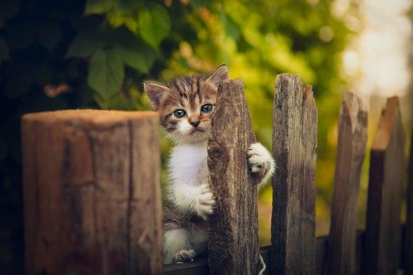 «Я тебя ждал весь день». фотография, кот, ждун, милота