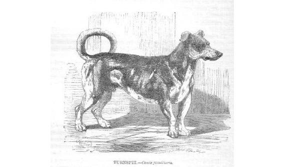 Собака в колесе Собака, Вымерший вид, История