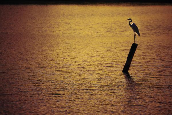 Чуток пейзажных фотографий. Приморье Приморский край, Природа, фотография, цапля, озеро, рассвет, длиннопост