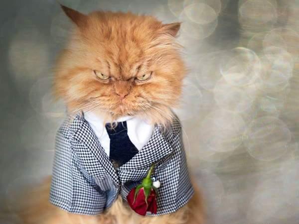 Доктор Зло кот, Кот Гарфи, зло, котомафия, длиннопост, зло не дремлет