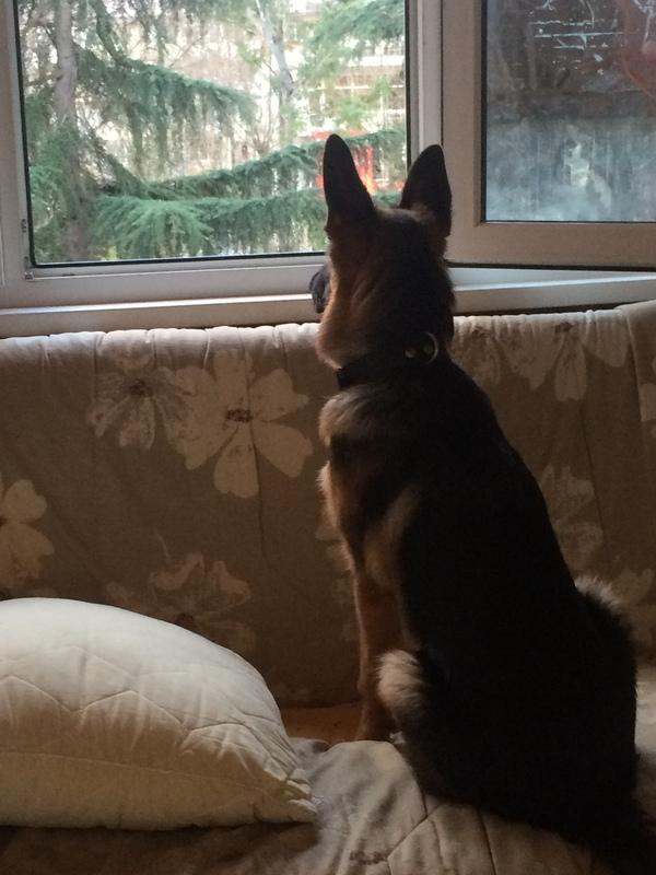 О том как я был по уши в дерьме Собака, нежданчик, когда дома ждец писец, длиннопост