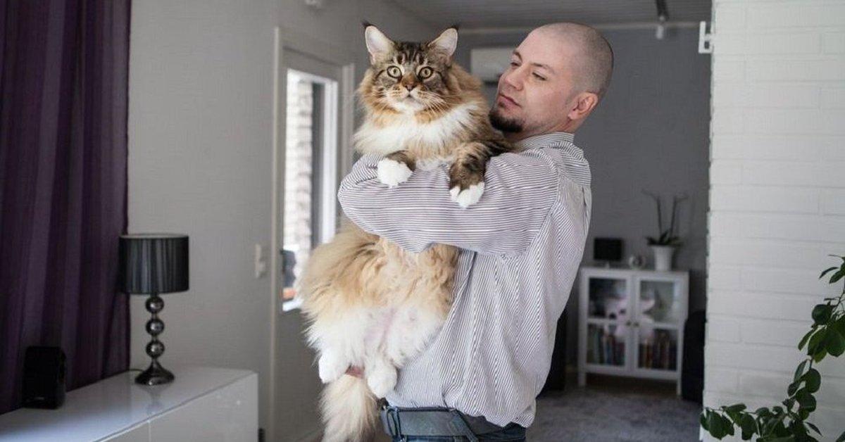 слова кирилла самые большие коты в мире показать фото выбору оттенка