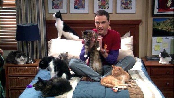 Когда ищешь оправдания своему одиночеству Теория большого взрыва, Шелдон, кот, Кровать