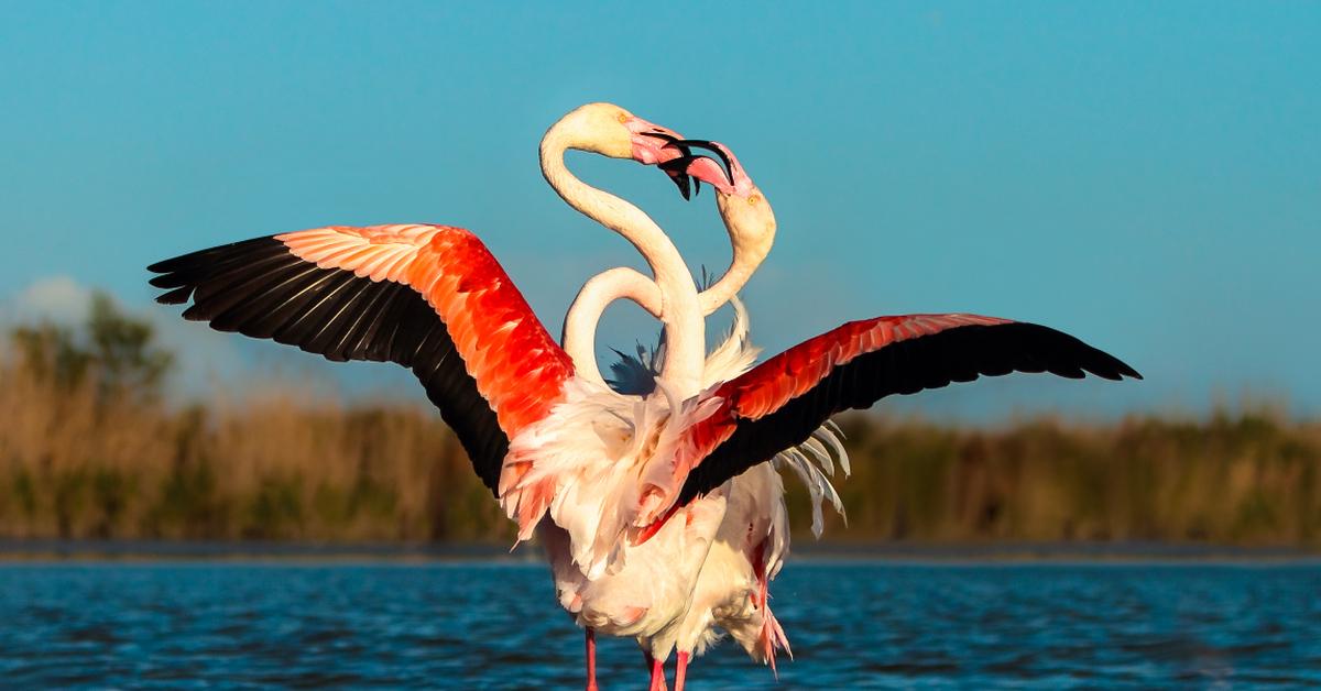 уже танцующие птицы фото воск это такое