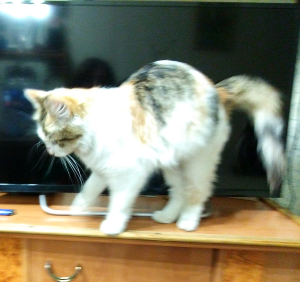 Найдена кошка! Кот, Кошка ищет хозяев, Найден кот, Санкт-Петербург