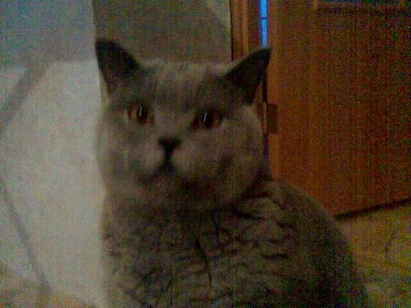 Фотография кота 2006 года