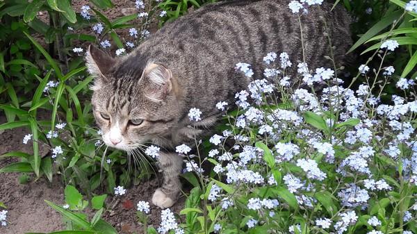 Кот из Менделеево Кот, Цветы, Клумба, Тобольск, Фотография