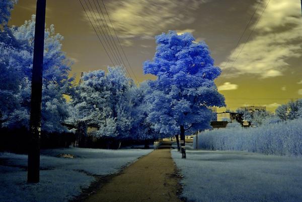 Инфракрасная фотосъемка на озере в Краснодаре Инфракрасная съёмка, Инфрасные фотографии, Фотография, Краснодар, Hoya