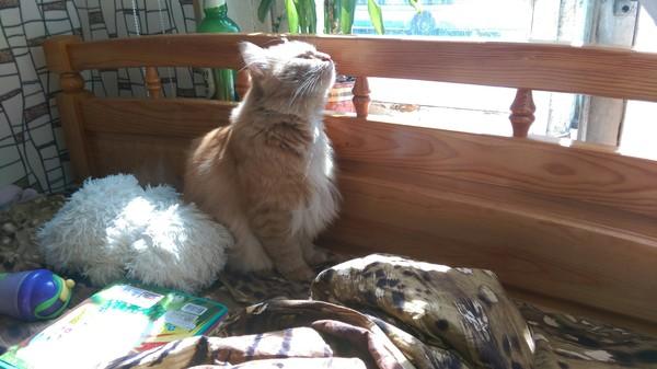 Кайф) Кот, Кот Рыжий Кот!, Трус