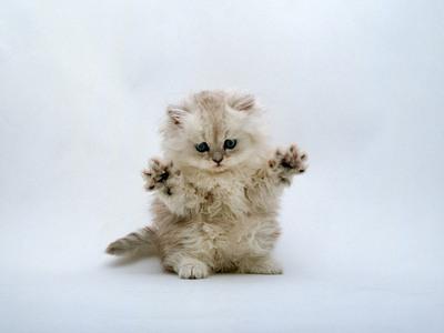 Сделайте типа годзилла Photoshop, кот, отфотошопьте, годзилла