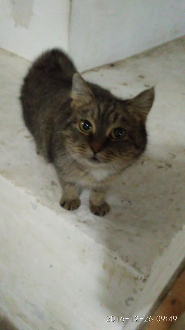 Вот такого красавца встретил в подвале на работе! кот, кошки и котята, котомафия, матерый кот, длиннопост