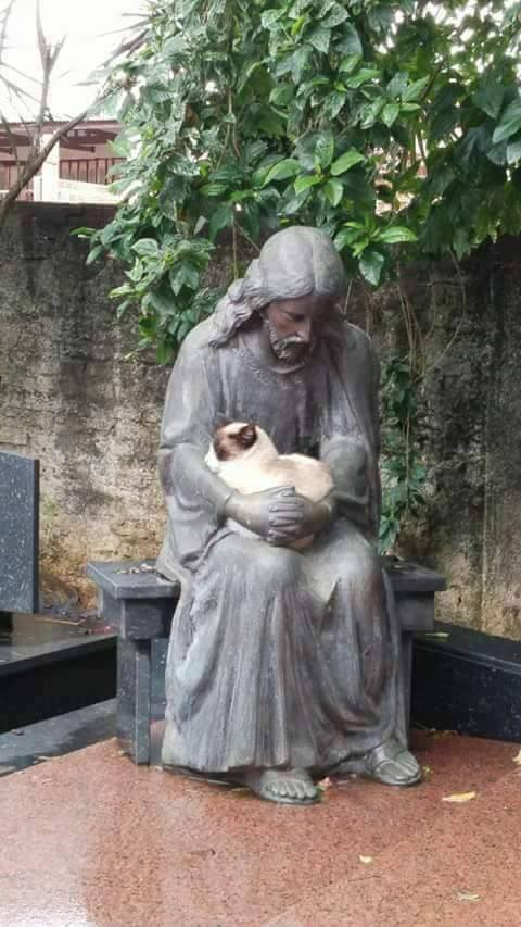 Котик нашёл своё место
