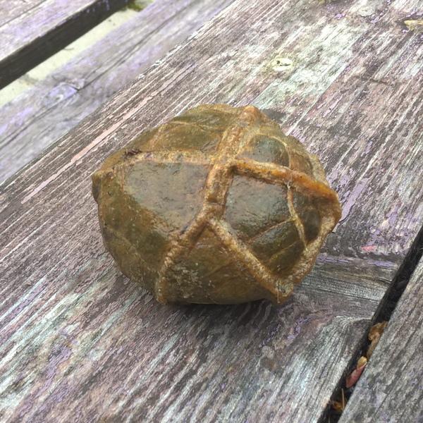 Нашел яйцо древнего Чужого окаменелости, Яйцо, палеонтология, находка, ундоры