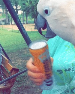 Будь у меня такой попугай...