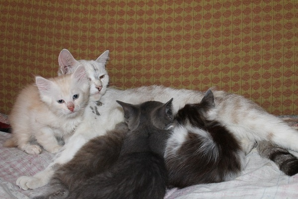 """Мой личный """"Котоленд"""" 81 кот, приют, Липецк, добро, помощь, Котоленд, длиннопост"""