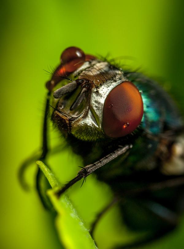 Макроохота №112 Макро, арахниды, бабочка, макроохота, улитка, мухи, Дождь, длиннопост