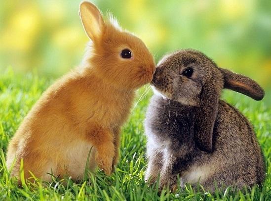 Самые ласковые животные милота, животные, ласка, любовь, длиннопост