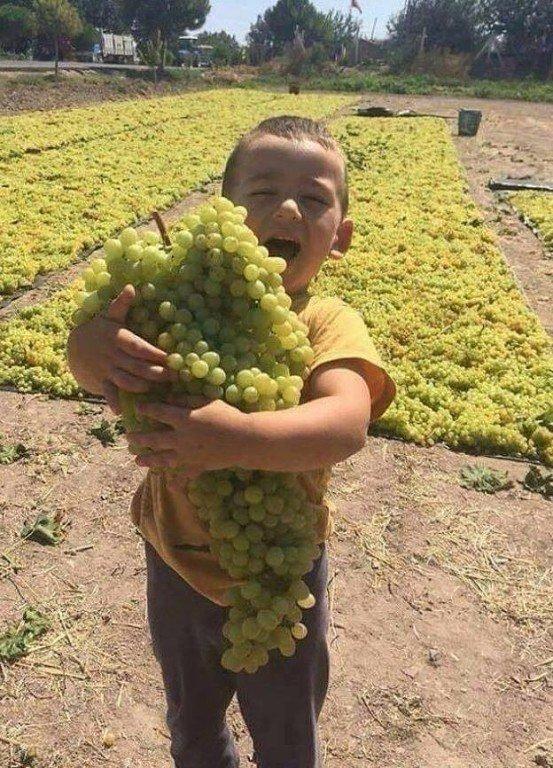 Мне одну веточку винограда пожалуйста...