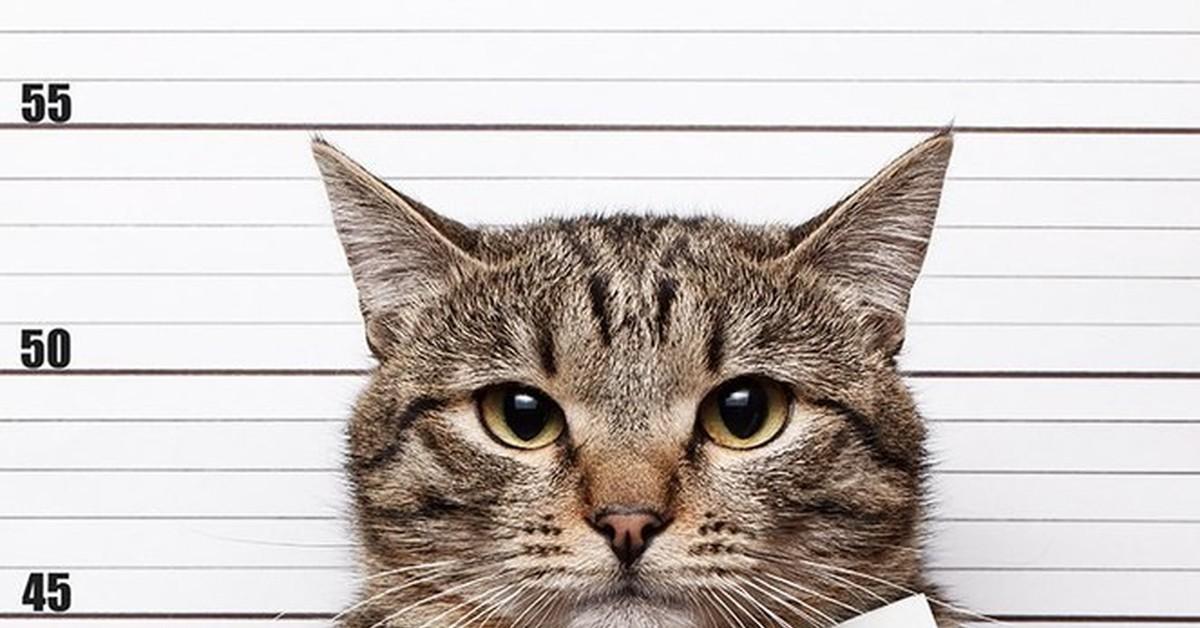 фото кота с табличкой в лапах разных уголках