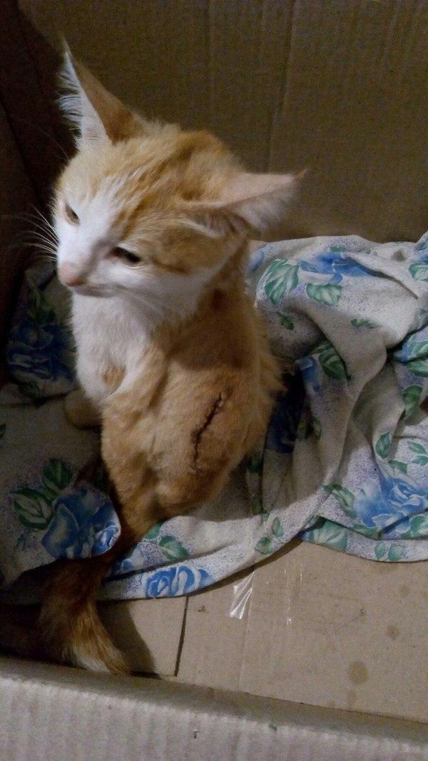 Мы в ответе за тех кого приручили. Или история про хороших-плохих вет.врачей кот, длиннопост, врачи, лечение